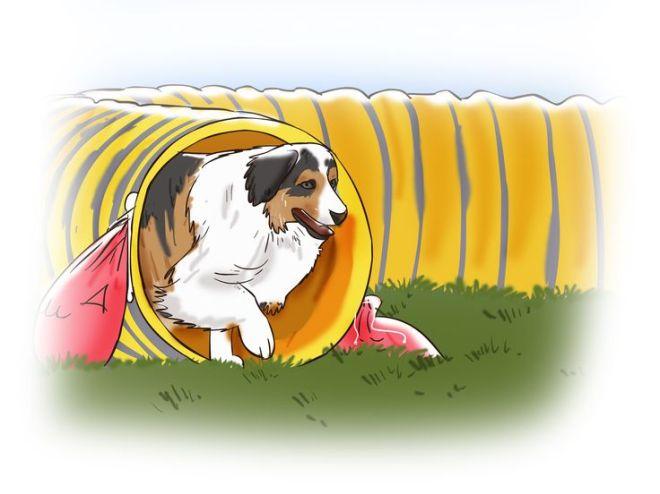 Build a dog agility course dog agility dogs and a dog