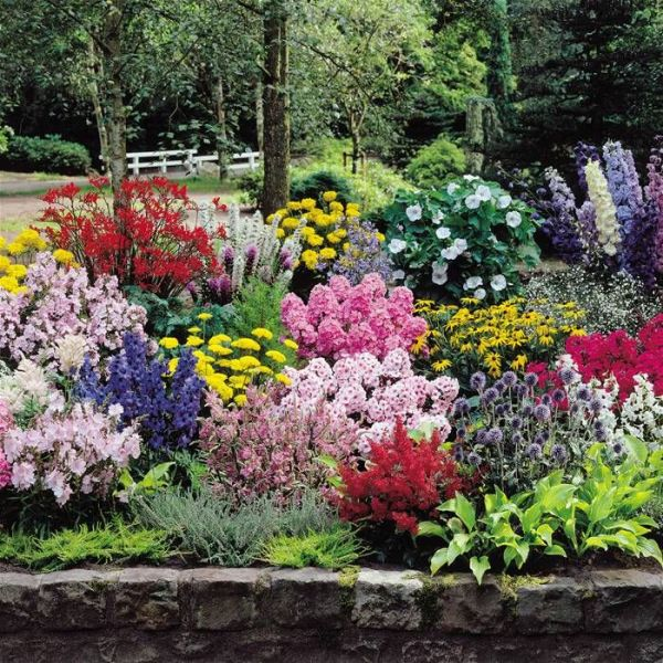 flowers for cottage style gardens Gardens4You - Online Garden Centre for all Your Hedges