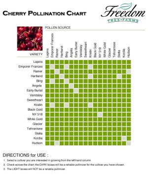 Cherry pollination chart | Espalier and trees | Pinterest | Fruit trees, Insect identification