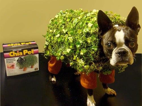 cha cha cha chia! lol.  Pet Halloween costume.
