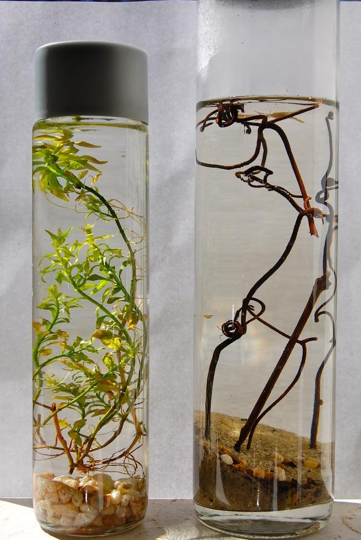 little ecosystems DIY