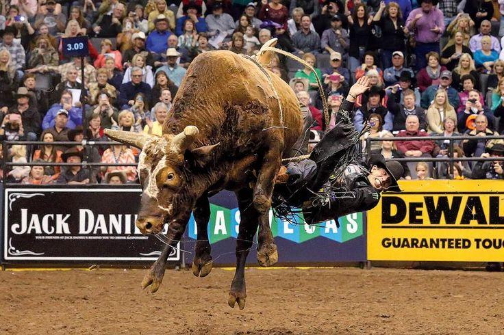 188 Best Images About Bushwacker Pbr Bucking Bull On