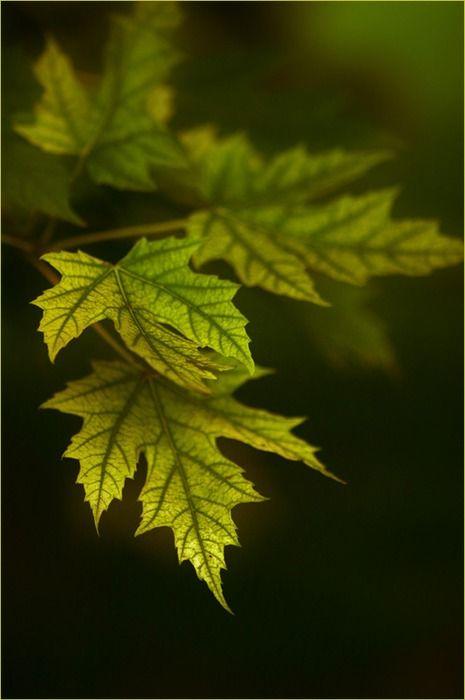 Зеленый цвет в психологии и культуре: color_harmony ...