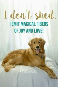 764 Best Images About Puppy Love On Pinterest The Golden