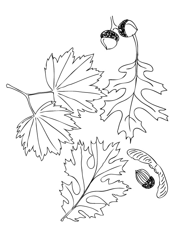 best images about coloring pages on pinterest