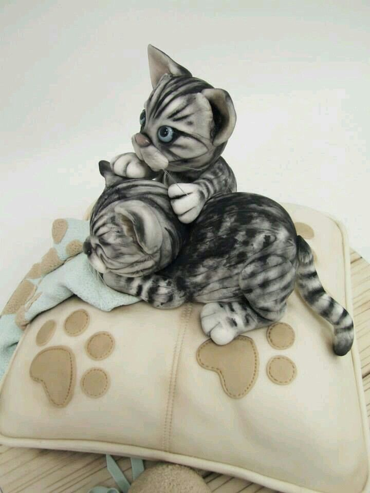1000 Images About Cat Cakes On Pinterest Cute Cats