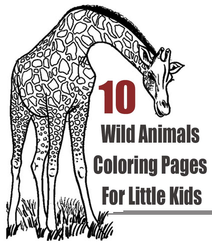 Top 25 Free Printable Wild Animals Coloring Pages Online ... | free printable colouring pages of wild animals