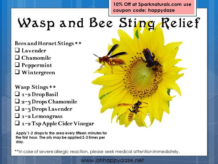 Essential Oils For Wasp Amp Bee Stings Essential OIls For