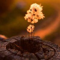 Le chagrin d'autrui et l'acceptation de nos limites