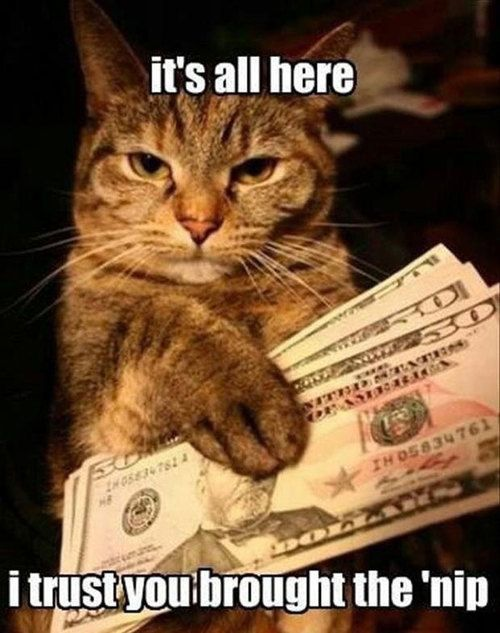 lol any cat would make this deal!