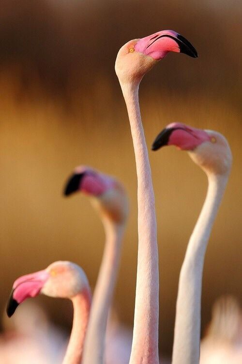 1000 Images About Flamingo Stuff On Pinterest Kitsch