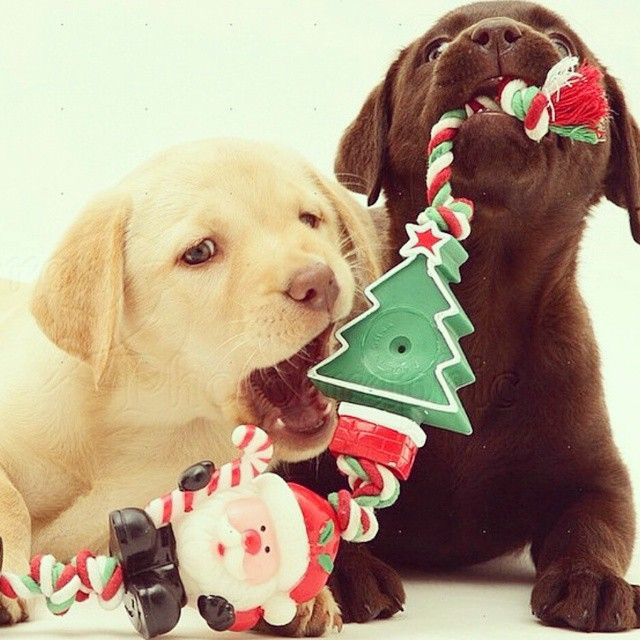 17 Best Images About Merry Christmas On Pinterest