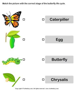 Butterfly life cycle: Match pictures with correct name  TurtleDiary | Animals: Life Cycles