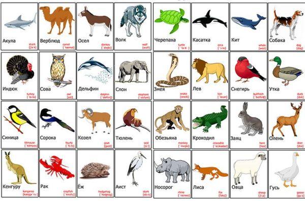 17 Best images about Английский язык для детей on ...