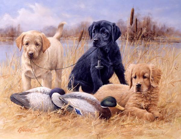Faithful Puppies Yellow Lab Black Lab Amp Golden Retriever