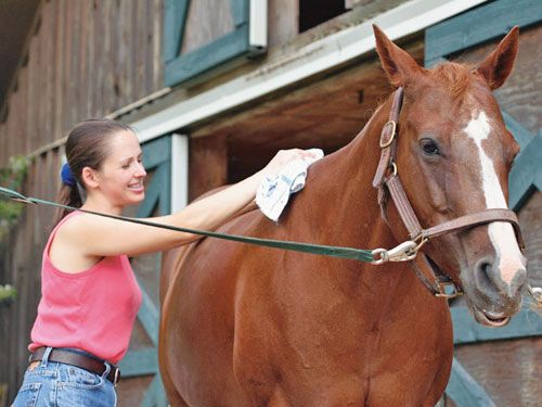 Head To Toe Horse Grooming Tips And Tricks MyHorse Daily