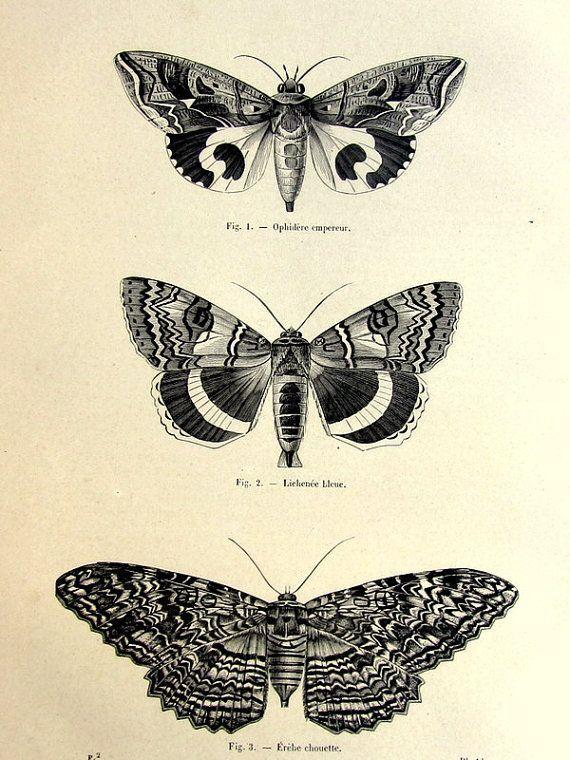 Punctured Artefact. Symbolism blog. Moth tattoo design. Ink trends. Leather