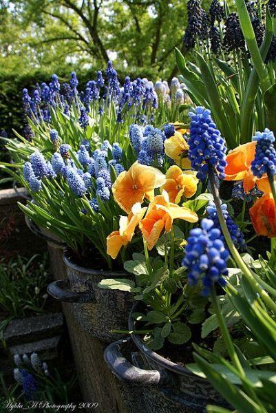 purple and orange flower garden purple and orange flowers of spring!!!! so pretty | green