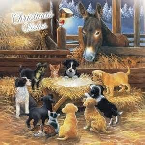 Animal Nativity Christmas Cards Bing Images Nativity