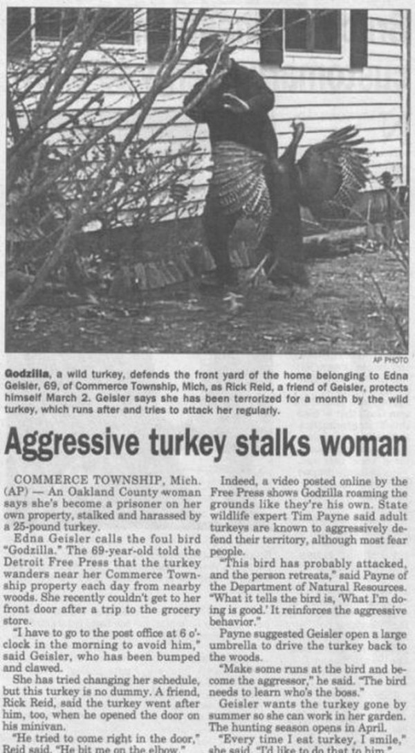 17 Best images about Funny Headlines on Pinterest | You ...
