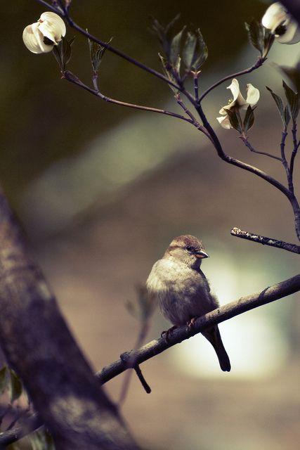59 Best Ideas About Sparrows On Pinterest Shelters