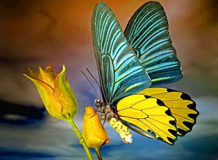 17 Best Images About Yellow Butterfly Beautiful Colors