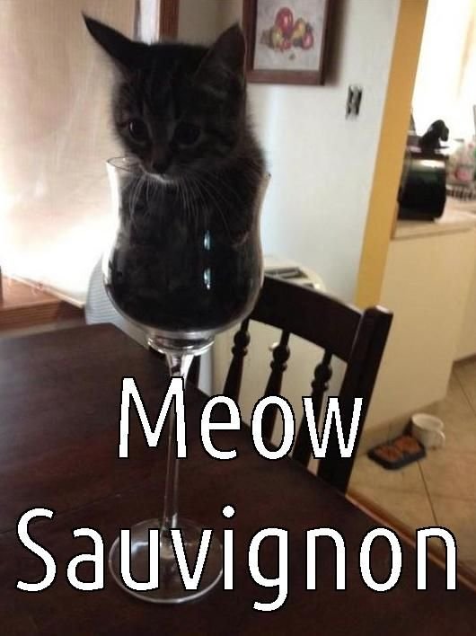 Wine Glass Kitten Meme I Love Funny Cats Pinterest
