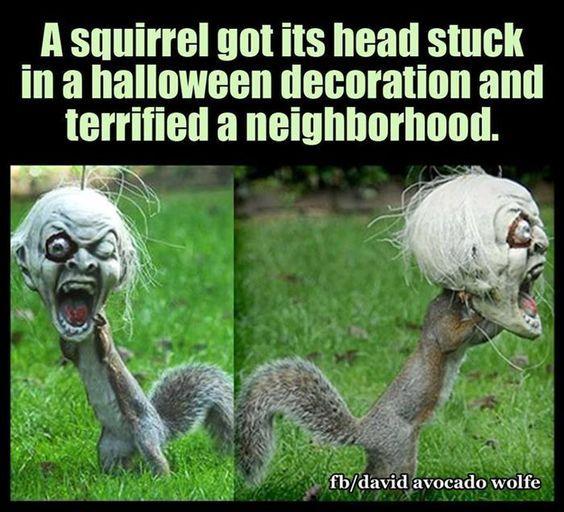 Best 20 Funny Halloween Jokes Ideas On Pinterest