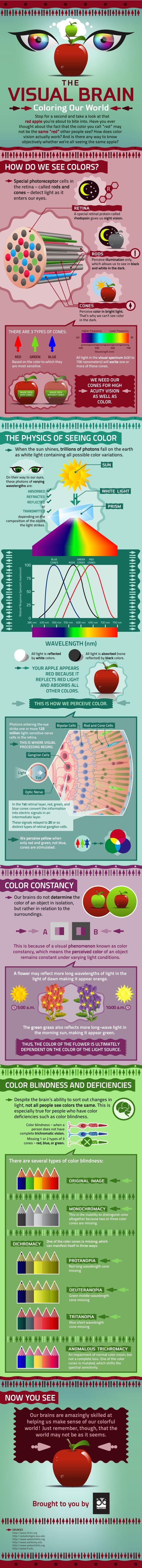 visual brain