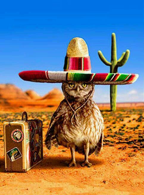Funny Mexican Birthday Card