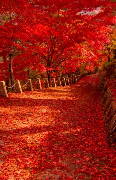 Autumn Leaves – Nara, Japan. Wow! Can you imagine standing there alone in silence?