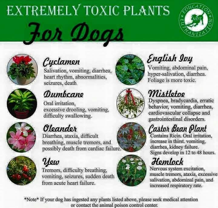 Toxic Plants For Dogs Pets Amp More Pinterest Plants