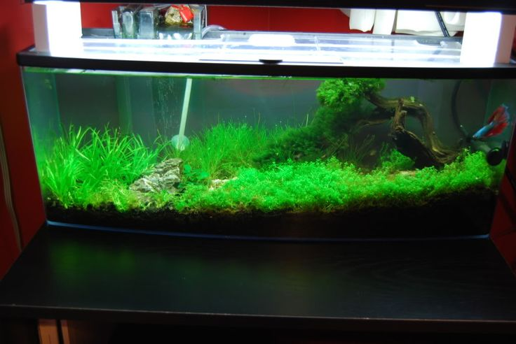 This Scape Is Great Tank 66 Petco Bookshelf Filtration