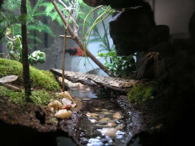 Temperate Forest Vivarium Pets Pinterest Inspiration