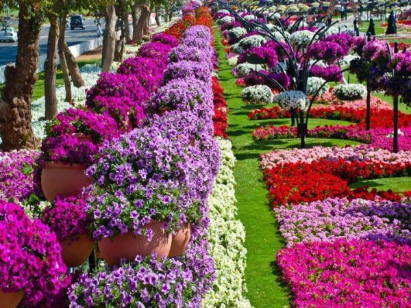beautiful flower gardens pinterest Beautiful Flower Garden | Garden | Pinterest | Gardens