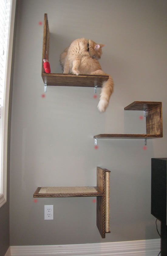 Diy Cat Climbing Wall Katzis Pinterest Cats