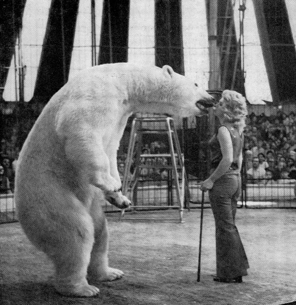 Did you know that polar bears have a history of being ...