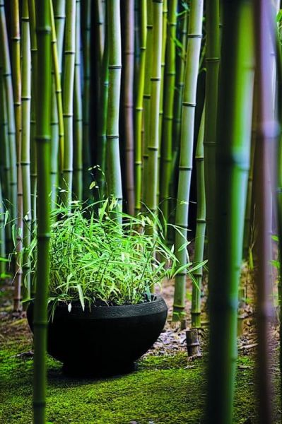 japanese gardens with bamboo 17 Best ideas about Bamboo Garden on Pinterest | Bamboo