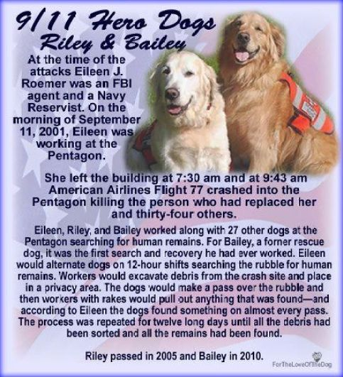 Image result for 9/11 dogs, dogs of 9/11