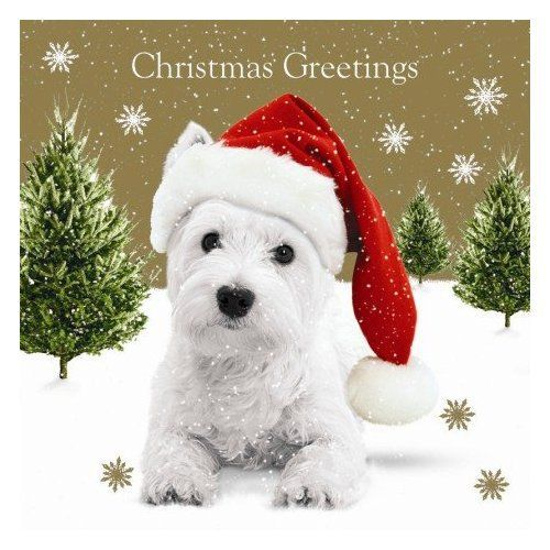 1000 Images About Westie Christmas On Pinterest
