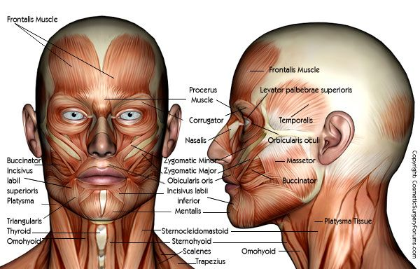 1000+ Images About Facial Anatomy On Pinterest