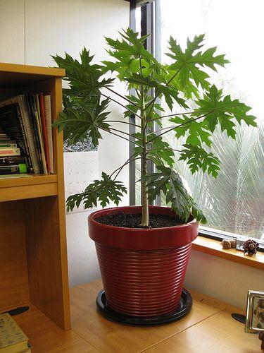 Growing Vegetables Pots