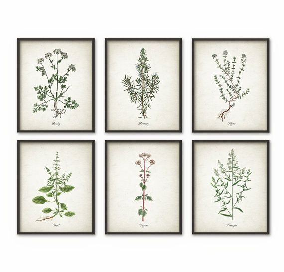 kitchen herbs wall art print set of 6 vintage botanical herb prints herb kitchen decor on kitchen decor paintings prints id=19602