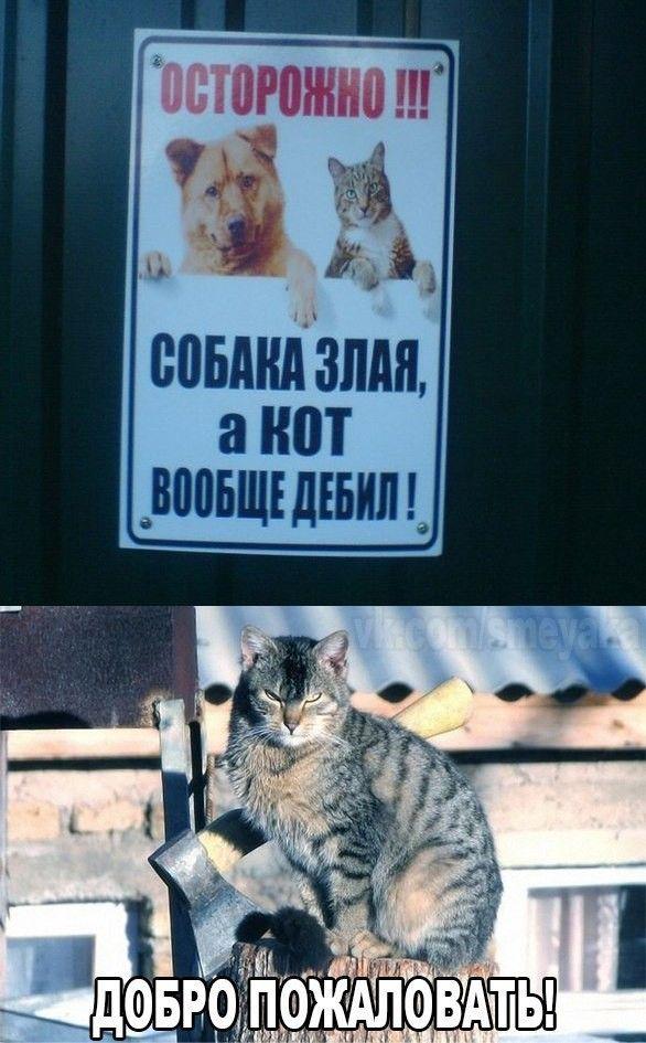 Смешные картинки для отличного настроения! | Юмор | Pinterest
