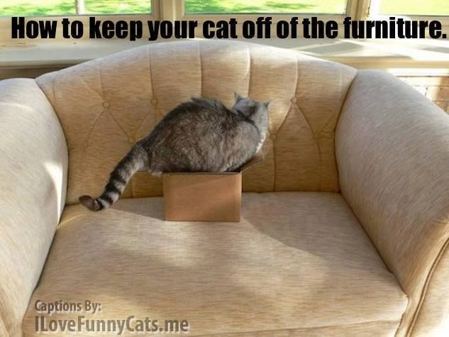 Keep Cats Off Furniture The Best Cat 2017