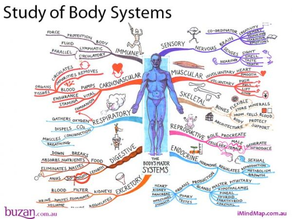 The Study of body systems mind map will help you to ...