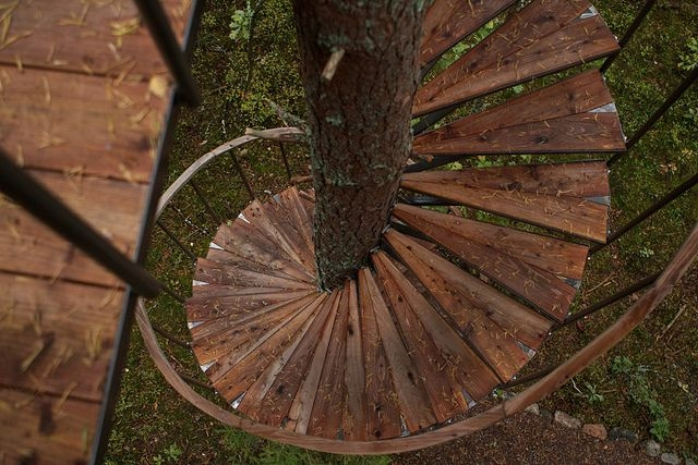 38 Best Images About Art Ideas Tree Deck Bench On Pinterest Decks Cruise Ships And Bench | Spiral Staircase Tree Trunk