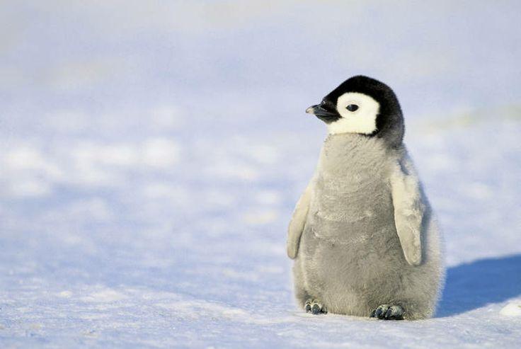 Penguin Pictures