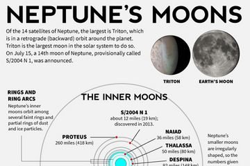 Facts About Neptunes Moons Infographic Facts about