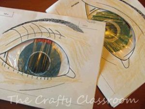 Human Body: eyes neat ideas for teaching about sight, braille, eyes, etc | Biology and Life